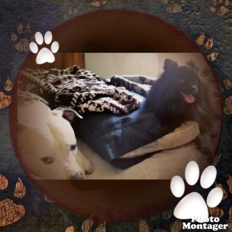 PhotoMontager_Creation_2017-04-25_102713